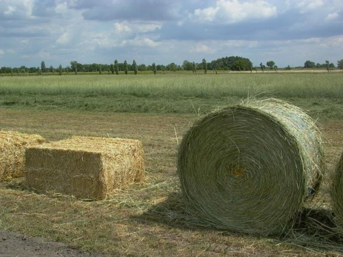 Producing bales with extremely low cost from this perennial hardy grass, has been demonstrated viability in several countries.
