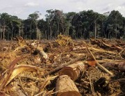 biomass carbon debt