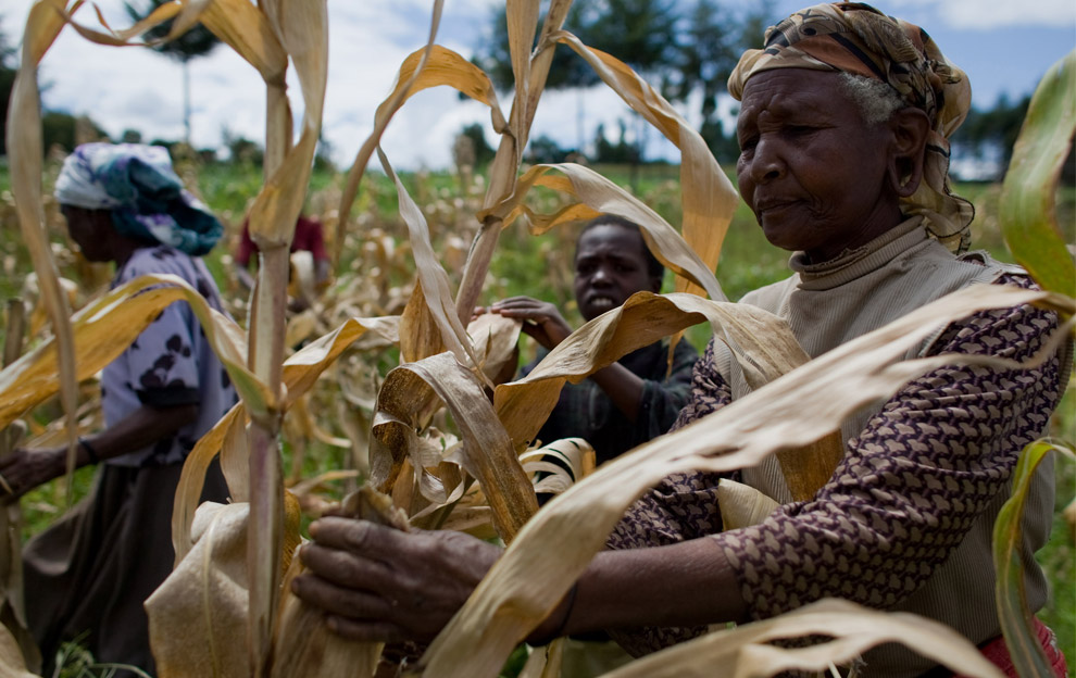 By using residues and cultivating degraded areas with woody and herbaceous energy plantations, african farmers can have the opportunity to increase resources and income that could enhance food productivity and security in the long term.