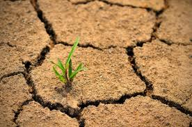 Desertification could be avoid through green covers and in particular promoting grasslands as perennial bioenergy crops