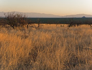 arizona_grasslands