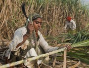 indian JPG sugar cane woman