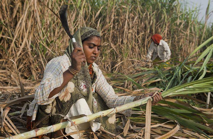 sugar industry of india In an age-old & traditionally run cyclical sugar industry in india, shree renuka sugars has always strived to do things differently by rewriting rules & reinventing.