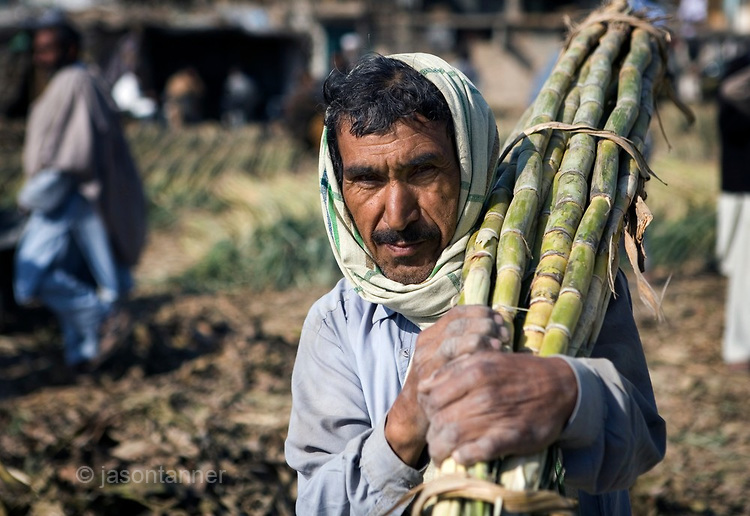 pakistan sugarcane-farmer