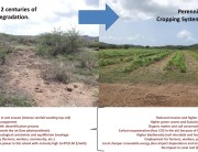 sustainable perennial bioenergy cropping systems