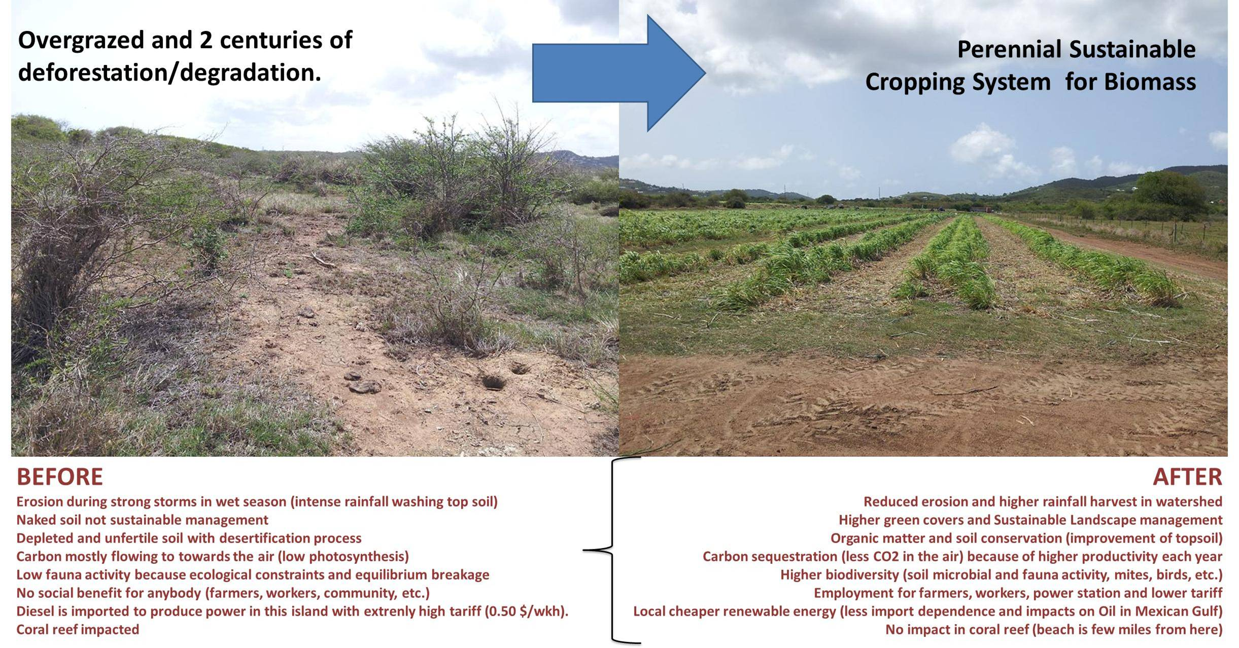 http://bioenergycrops.com/wp-content/uploads/2014/09/sustainable-perennial-bioenergy-cropping-systems.jpg