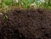 energy crops improving soils perennials biomass3