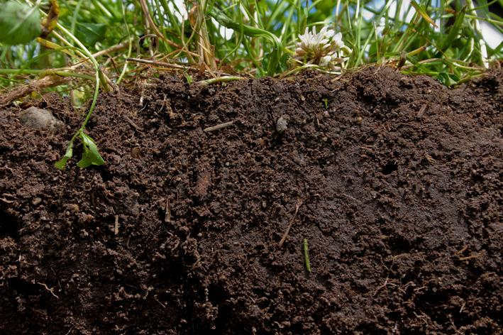 bioenergy crops energy crops can improve eu soil fertility