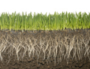 grass-roots-healthysoils