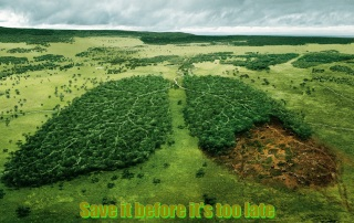 deforestation-and-lungs