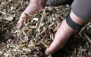 willow chips
