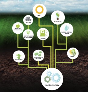 bioeconomy and products